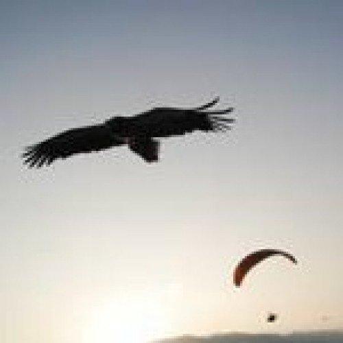 Свободата на птиците - полет над гнездата на лешоядите в Кресна